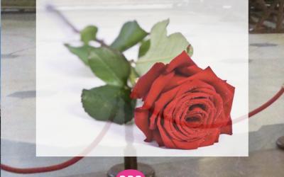 Éxito 1º convocatoria Rosas digitales